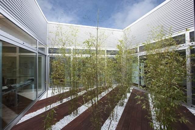 trees LV fabric